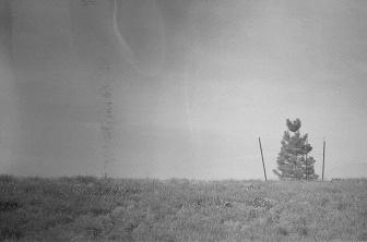solo-tree